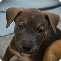 Adopt A Pet :: Wyatt - Burleson, TX