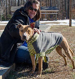 Terrier (Unknown Type, Medium) Mix Dog for adoption in Midlothian, Virginia - Sandy Duncan