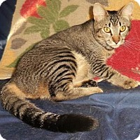 Adopt A Pet :: Abby - Davis, CA
