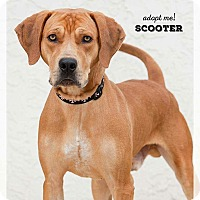 Adopt A Pet :: Scooter - Wichita, KS