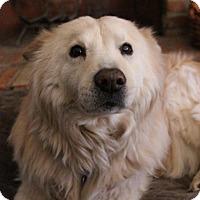 Adopt A Pet :: Fox - Littleton, CO