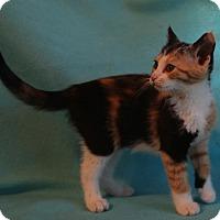 Adopt A Pet :: Pansy - Spring Valley, NY