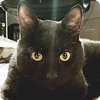 Adopt A Pet :: Woodrow - Eureka, CA