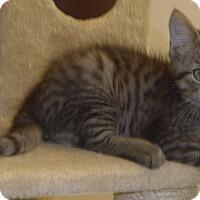 Adopt A Pet :: Tonka - Manning, SC