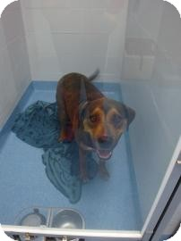 Rottweiler Mix Dog for adoption in Gainesville, Florida - Rusty
