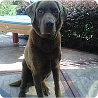 Adopt A Pet :: *Harley - Winder, GA