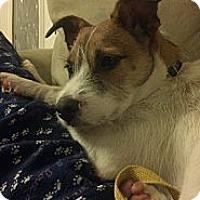 Adopt A Pet :: Sampson in Bryan - Houston, TX