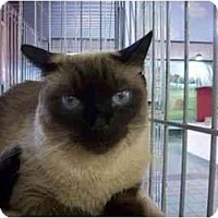 Adopt A Pet :: Nya - Oakland Park, FL