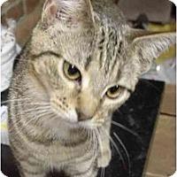 Adopt A Pet :: Dory - Chesapeake, VA