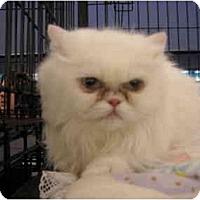 Adopt A Pet :: Julianna - Riverside, RI
