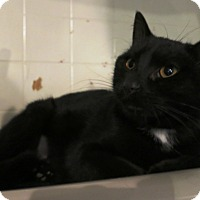 Adopt A Pet :: Sabrina - Geneseo, IL