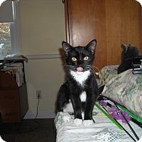 Adopt A Pet :: Sarah - Riverside, RI