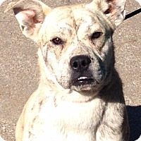 Adopt A Pet :: Joe Joe - Allentown, PA