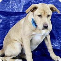 Adopt A Pet :: Brooke - Picayune, MS