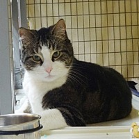 Adopt A Pet :: Zeb - St. Johnsbury, VT