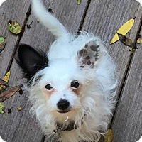 Adopt A Pet :: PIP - Emeryville, CA