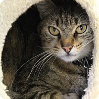 Adopt A Pet :: Bucky - Bradenton, FL