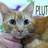 Adopt A Pet :: Pluto - Wichita Falls, TX