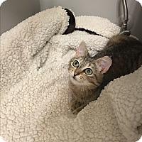 Adopt A Pet :: Josephine - Richmond, VA