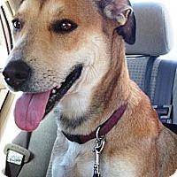 Adopt A Pet :: Sandy - Franklin, TN
