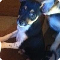 Adopt A Pet :: Jelly - pasadena, CA