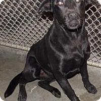 Adopt A Pet :: Moses - Shirley, NY