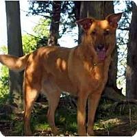 Adopt A Pet :: Tucker - Toronto/Etobicoke/GTA, ON