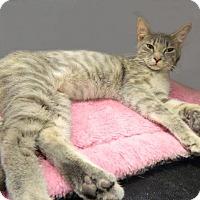 Adopt A Pet :: Celeste - The Colony, TX
