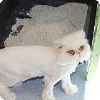 Adopt A Pet :: JoJo - El Cajon, CA