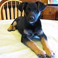 Adopt A Pet :: Duke - Bedminster, NJ