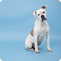 Adopt A Pet :: Likah - Los Angeles, CA