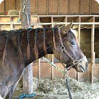 Adopt A Pet :: Leo - Larskpur, CO