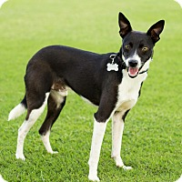 Adopt A Pet :: Russell - Georgetown, KY