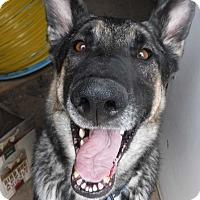Adopt A Pet :: BUDDY **adoption pending!** - Nampa, ID