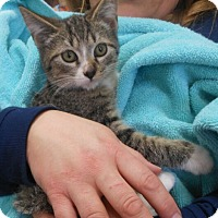 Adopt A Pet :: Chip - Reston, VA