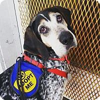 Adopt A Pet :: Roy (Has Application) - Washington, DC