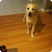 Adopt A Pet :: Abe - Lebanon, ME