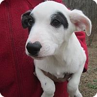 Adopt A Pet :: ETHAN - Brookside, NJ