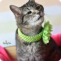 Adopt A Pet :: Eliza - Wayne, PA