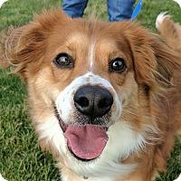 Adopt A Pet :: Brody - Lisbon, OH
