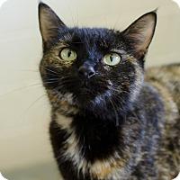 Adopt A Pet :: Camellia - Greenwood, SC