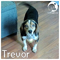 Adopt A Pet :: Trevor - Pittsburgh, PA