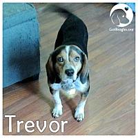 Beagle Dog for adoption in Pittsburgh, Pennsylvania - Trevor