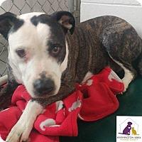 Adopt A Pet :: Sally - Eighty Four, PA