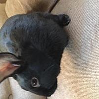 Adopt A Pet :: Maya - Maple Shade, NJ