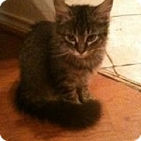 Adopt A Pet :: Abercrombie - Justin, TX