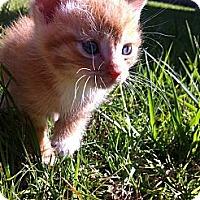 Adopt A Pet :: Breeze - Houston, TX