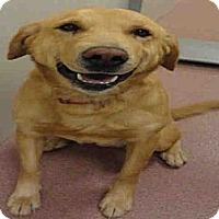 Adopt A Pet :: Smith - Ogden, UT