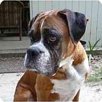 Adopt A Pet :: Pasha - Thomasville, GA