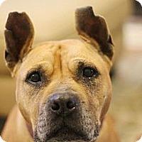Adopt A Pet :: Nancy - Reisterstown, MD